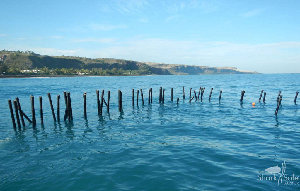 Magnetic 'Kelp' Forest to Keep Sharks Away From Beaches (National Geographic)